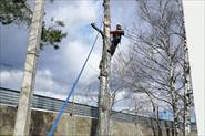 Кронирование деревьев. Арбористика. Промышленный альпинизм.