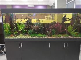 Пресноводные аквариумы