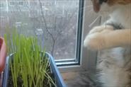 Кошка выросла ,дерево погибло :(