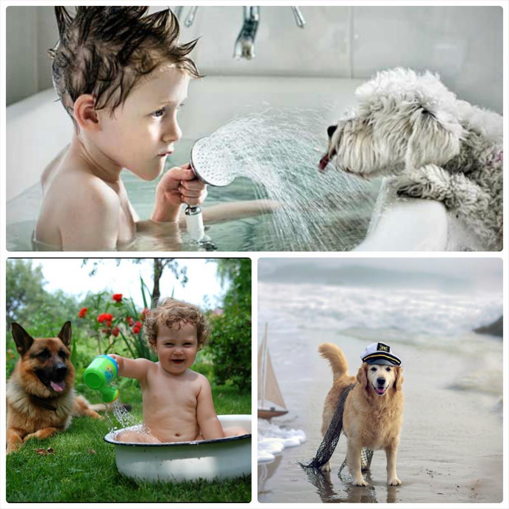 фотосессии с собаками